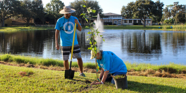 Two people in blue t-shirts plant a tree in front of a pond